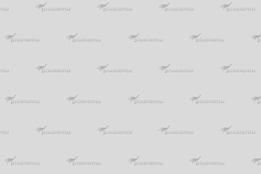desktop publishing software like Aldus PageMaker
